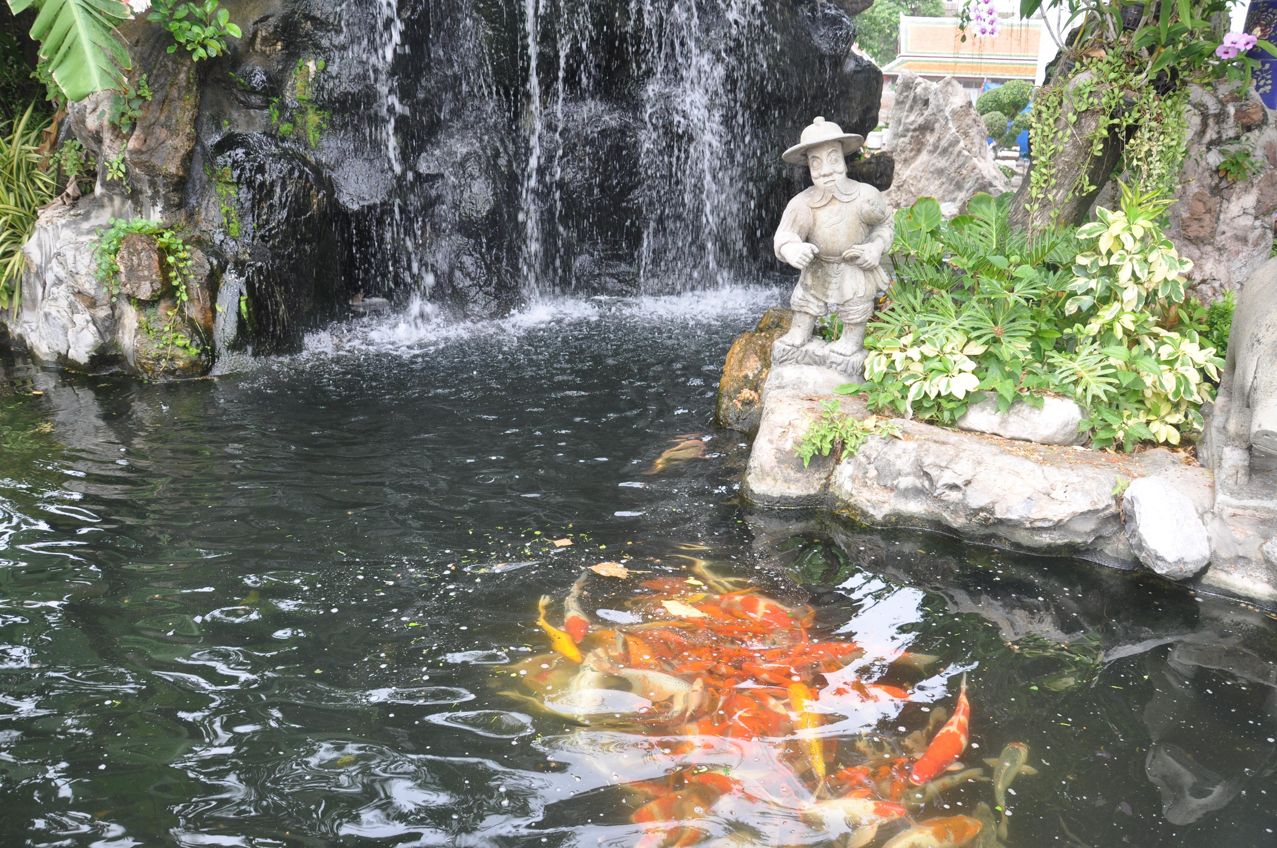 Dispute over japanese garden escalates canyon news for Koi pond tokyo