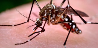 Mosquito bites can cause West Nile Virus.