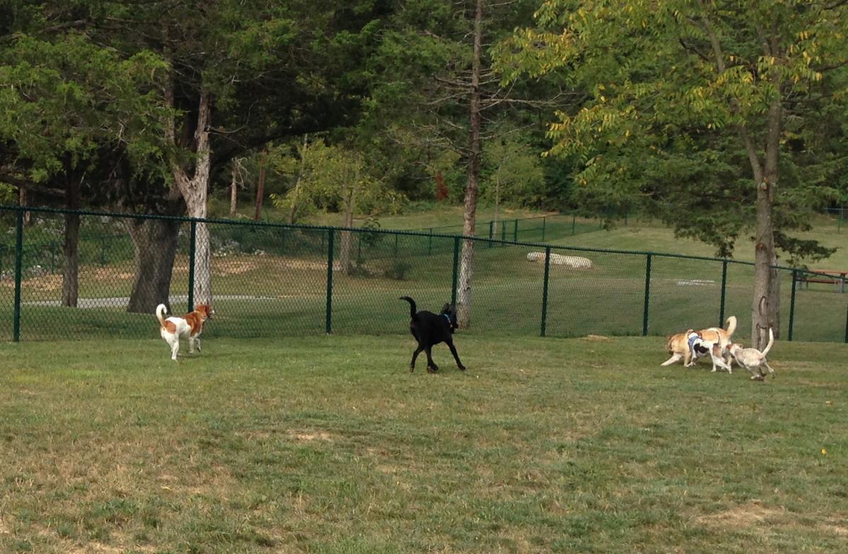 Brentwood California Dog Park