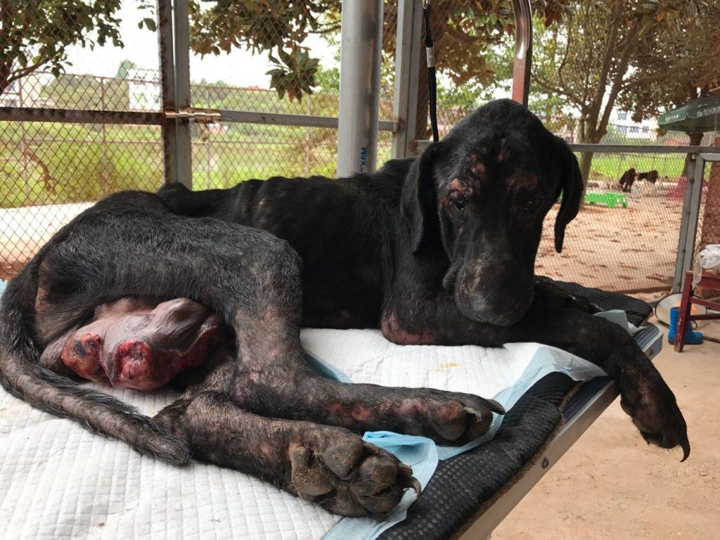 Yulin Dogs For Adoption - Canyon News