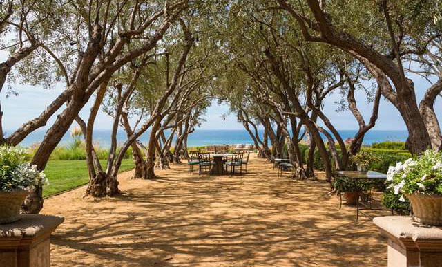 """The """"enchanting allee of olive trees"""" on NBCUniversal CEO Steve Burke's new Pacific Palisades property. Photo from Coldwell Banker Real Estate."""