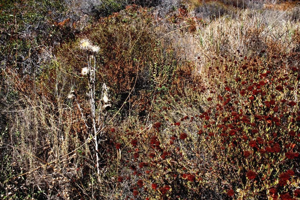 Weeds amidst dry brush at Topanga State Park