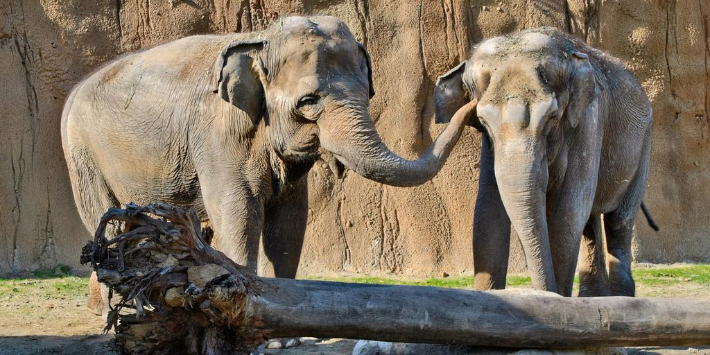 World Elephant Day is August 12. Photo via @LAzoo on Twitter.