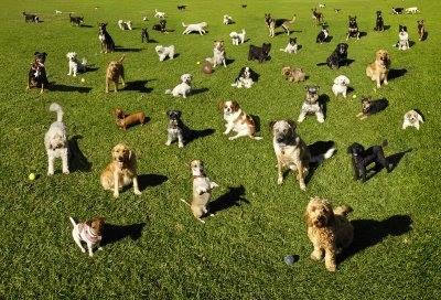dog park, Beverly Hills